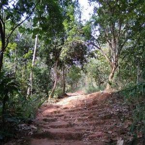 escursioni chiang mai fai da te, trekking