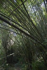 Luang Namtha trekking, giungla