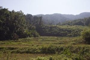Luang Namtha trekking, l'immensità della foresta