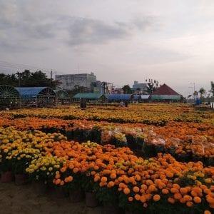 Regione del Mekong Delta, mercato dei fiori
