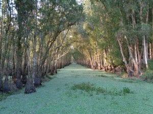 Foresta del Mekong delta