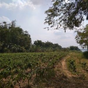 kampong cham - Ambiente rurale fuori dal centro città