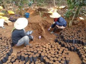 l'altopiano del bolaven e champasak - piantagioni di caffè