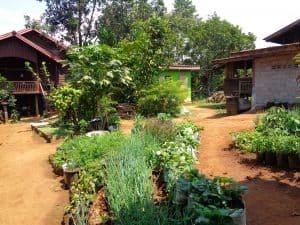 l'altopiano del bolaven e champasak- farm